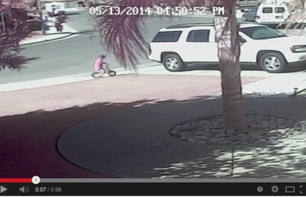 Brave cat saves young boy from dog!